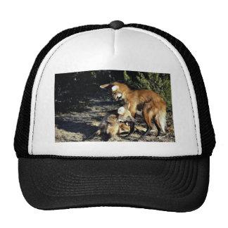 Maned wolves, mated pair mesh hat
