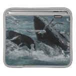 Manga del iPad de las ballenas jorobadas Fundas Para iPads
