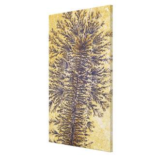Manganese dendrites, Southwestern USA Canvas Print