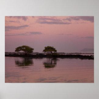 Mangles en la puesta del sol póster