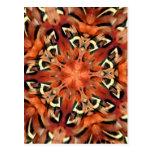 Mango Pheasant Feather Kaleidoscope  Mandala Postcard