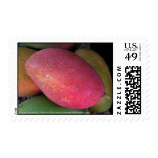 Mango Study #1 Postage