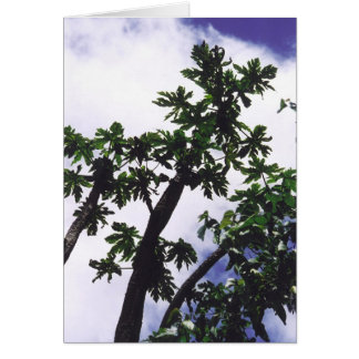 Mango Tree Card