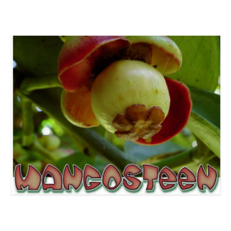 Mangosteen Postcard