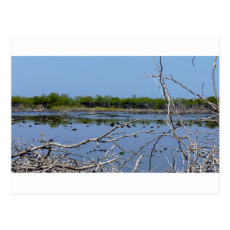 mangrove bay postcard