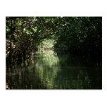 Mangrove Canopy, Tenacatita, Mexico Postcard