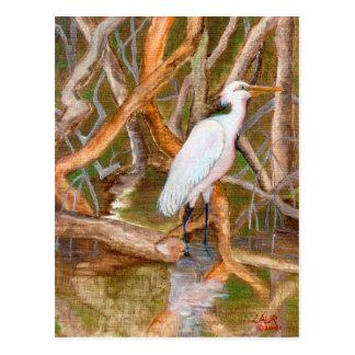 Mangrove Egret No. 2 Postcard