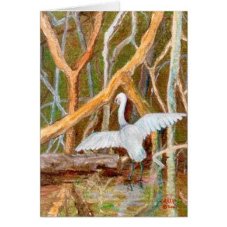 Mangrove Egret No. 3 Card