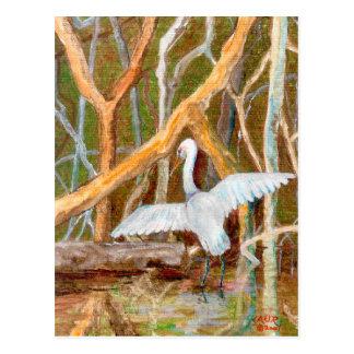 Mangrove Egret No. 3 Postcard