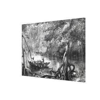 Mangrove Forest' Canvas Print