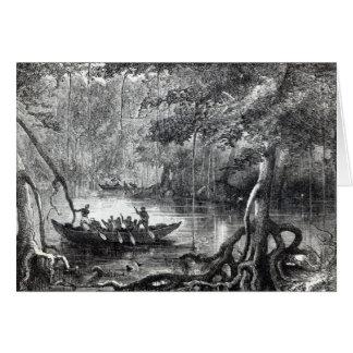 Mangrove Forest' Card