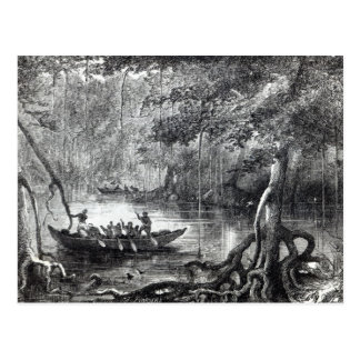 Mangrove Forest' Postcard