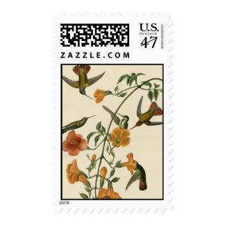 Mangrove Hummingbird Postage Stamp