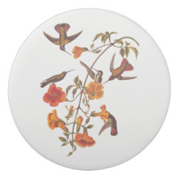 Mangrove Hummingbirds With Orange Trumpet Flowers Eraser ...