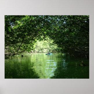 Mangrove Kayaking Posters