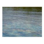 Mangrove Lagoon Water Caribbean Blue Postcard