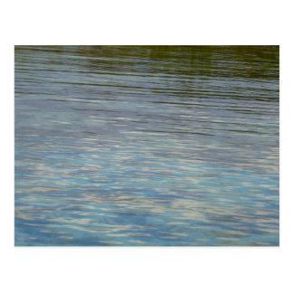 Mangrove Lagoon Water Caribbean Photo Postcard