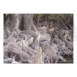 Mangrove Roots Greeting Cards