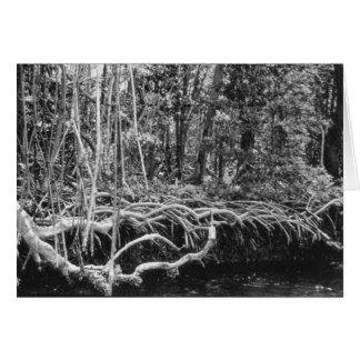 Mangrove Shore, Florida Everglades, August 1957 Card