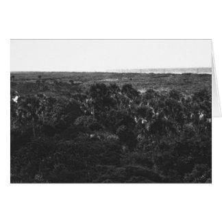 Mangrove Swamps and Hammock, Marco Island, Florida Card
