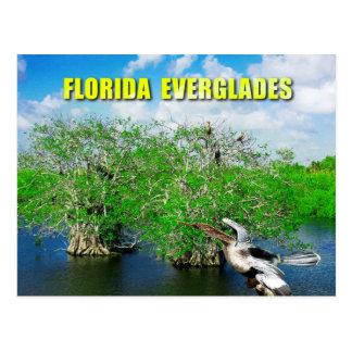 Mangrove Trees & Anhinga, Florida Everglades Postcard
