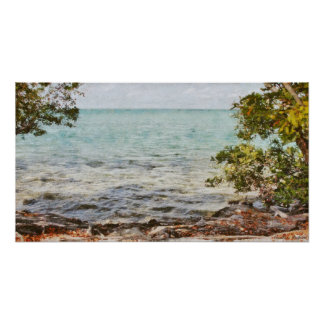 Mangrove Trees in the Florida Keys Poster