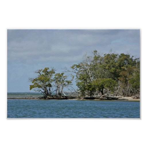 Mangrove trees on island posters
