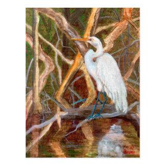 MangroveNo1Egret Postcard