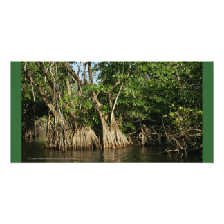Mangroves of San Blas, Mexico Card