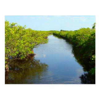 Mangroves Postcard