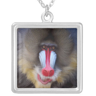 Manly Mandrill Jewelry