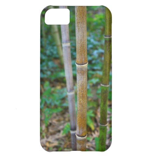 Manly, Masculine, Bamboo, Asian, Iphone 5 case