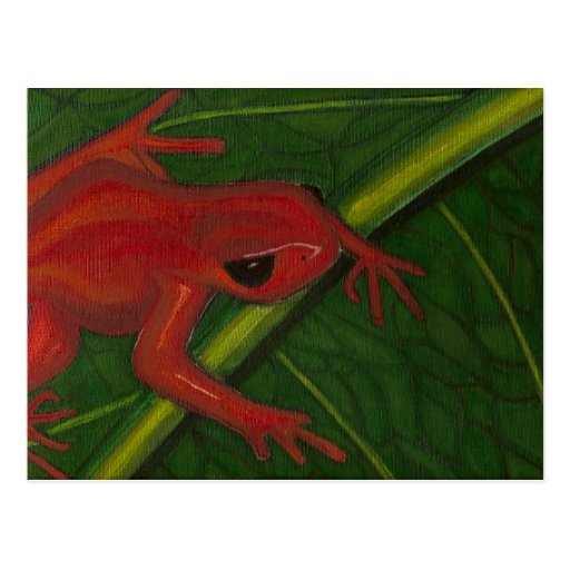 Manny The Mantella (Frog) Postcard