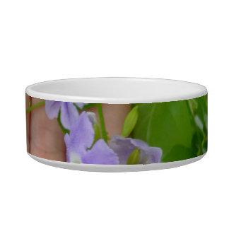 Mano, flores púrpuras, hojas comedero para mascota
