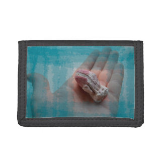 mano que sostiene el trullo del seashell de la