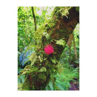 Manoa Rain Forest Canvas Print