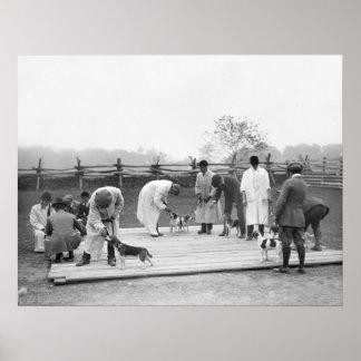 Manojo de Beagles, 1914 Póster