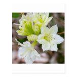 Manojo de flores salvajes blancas postal