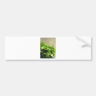 Manojo de hierbas frescas pegatina para auto