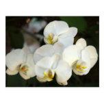 Manojo de la orquídea postal