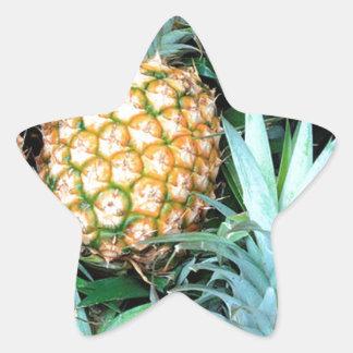 Manojo de las piñas pegatina en forma de estrella
