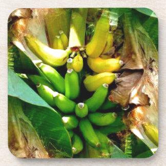 Manojo de plátanos amarillos y verdes deliciosos posavasos de bebidas