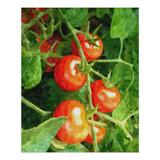 Manojo de tomates póster