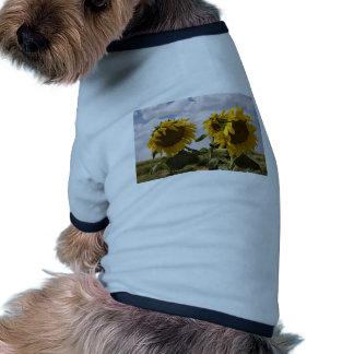 Manojo del girasol camiseta con mangas para perro