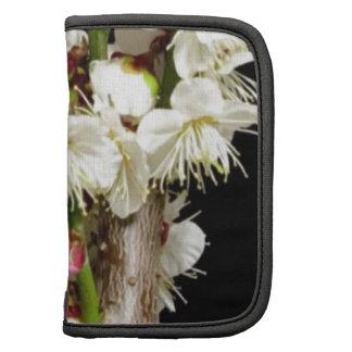 Manojo exótico de la flor blanca por los regalos organizadores