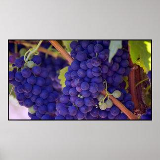 Manojo grande de uvas púrpuras jugosas póster