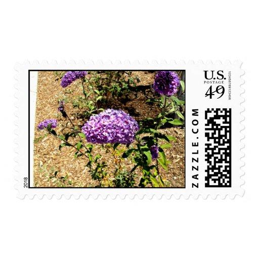 Manojo púrpura de la flor sellos