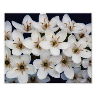 Manojos de flores blancas fotografía