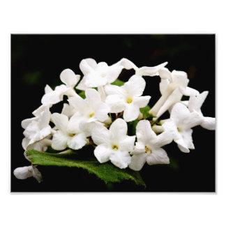 Manojos de flores blancas fotografías