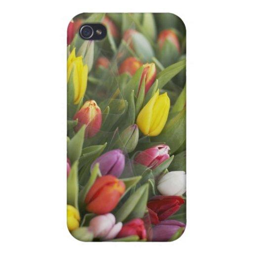 Manojos de tulipanes coloridos iPhone 4 fundas